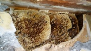 beehive removal miami