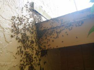 bee hive removal miami