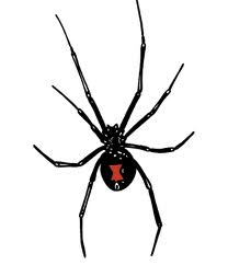black widow control miami