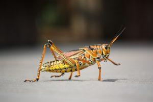 grasshopper control miami