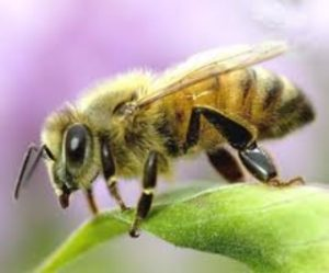 honey bee removal miami